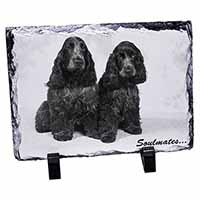 Blue Roan Cocker Spaniel Dogs
