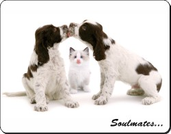 Dogs and Cat Love Sentiment