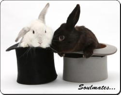 Rabbits in Top Hats