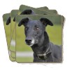 4x Black Greyhound Dog Picture Coasters Gift Set