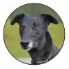 Black Greyhound Dog Fridge Magnet Animal Gift