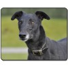 Black Greyhound Dog Computer Mouse Mat/ Pad