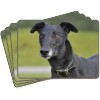 Black Greyhound Dog Picture Placemats in Gift Box