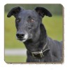Black Greyhound Dog Single Coaster Gift Idea
