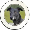 Black Greyhound Dog Car Tax Disc, Licence Holder