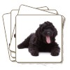 4x Black Labradoodle Dog Picture Coasters Gift Set