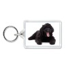 Black Labradoodle Dog Photo Keyring Animal Gift