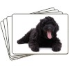 Black Labradoodle Dog Picture Placemats in Gift Box