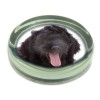 Black Labradoodle Dog Glass Paperweight in Gift Box