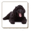 Black Labradoodle Dog Single Coaster Gift Idea