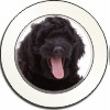 Black Labradoodle Dog Car Tax Disc, Licence Holder