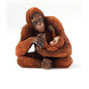 Country Artists Orang-Utan+Baby